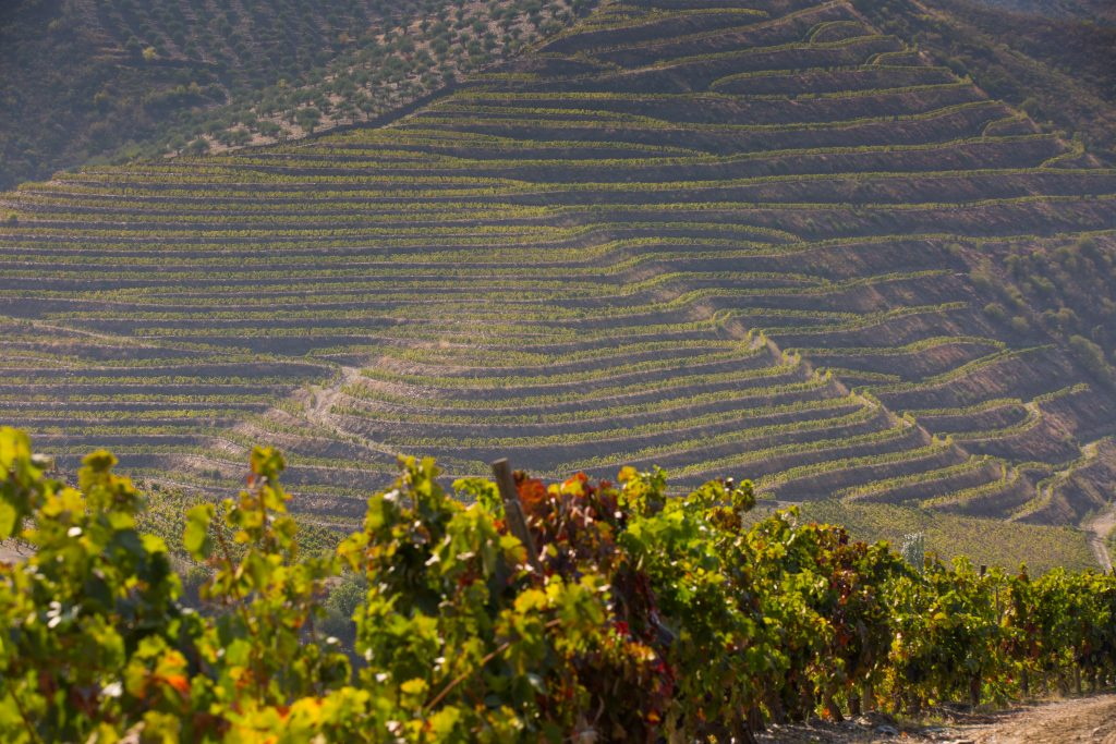 Vignoble Carlos Ferreira Vineyard, Douro Portugal